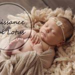 La 4ème merveille : naissance d'un bébé lotus